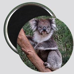 Helaine's Koala 5 Magnet