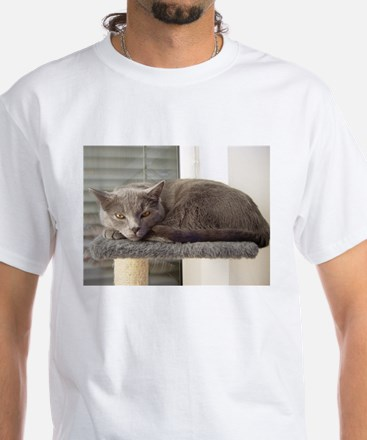 chartreux laying T-Shirt