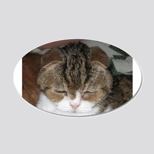 exotic shorthair brown tabby Wall Decal