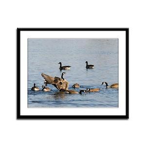 Geese Framed Panel Print