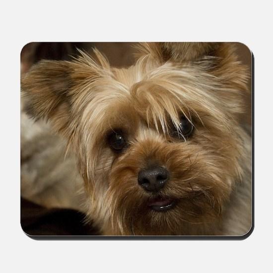 Yorkie Puppy Mousepad