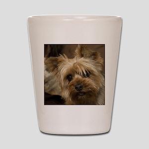 Yorkie Puppy Shot Glass
