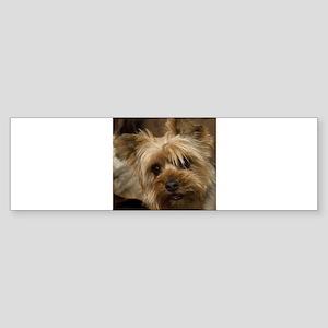 Yorkie Puppy Bumper Sticker