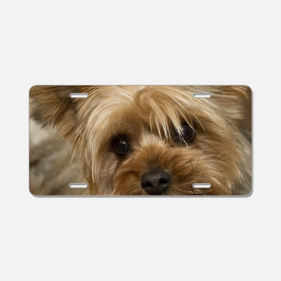 Yorkie Puppy Aluminum License Plate