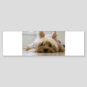 Yorkie Dog Bumper Sticker