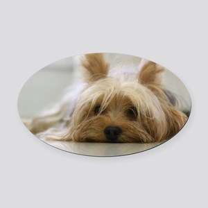 Yorkie Dog Oval Car Magnet