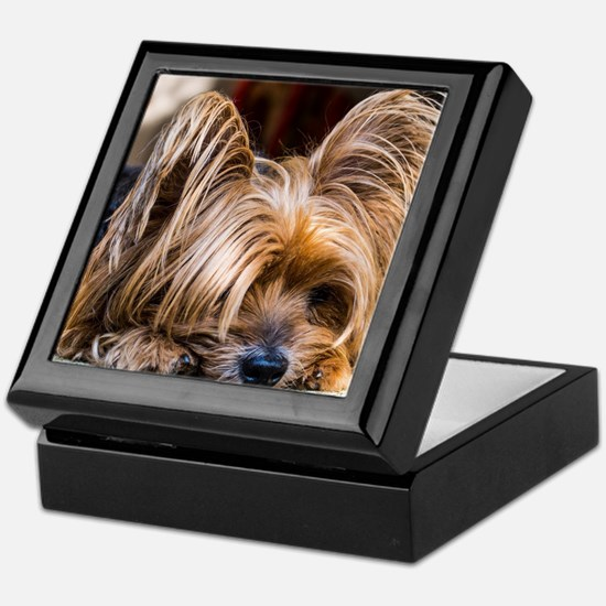 Yorkshire Terrier Dog Small Cute Pet Keepsake Box
