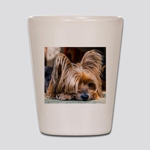 Yorkshire Terrier Dog Small Cute Pet Shot Glass