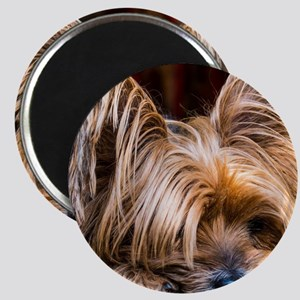 Yorkshire Terrier Dog Small Cute Pet Magnets