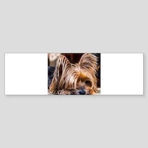 Yorkshire Terrier Dog Small Cute Pe Bumper Sticker