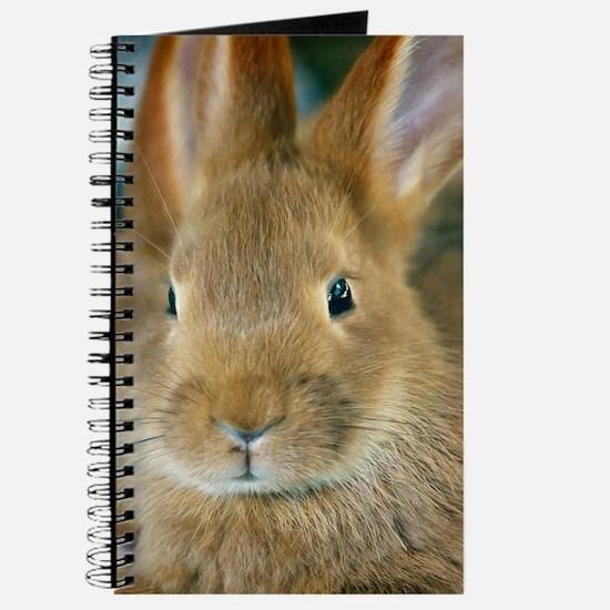 Animal Bunny Cute Ears Easter Journal