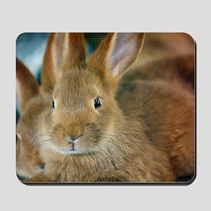 Animal Bunny Cute Ears Easter Mousepad