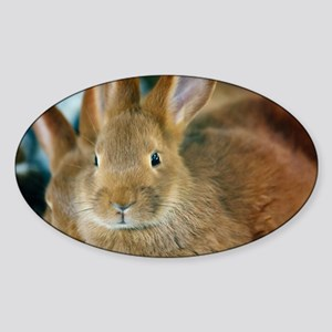 Animal Bunny Cute Ears Easter Sticker