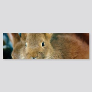 Animal Bunny Cute Ears Easter Bumper Sticker