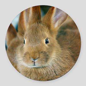 Animal Bunny Cute Ears Easter Round Car Magnet