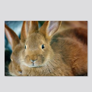 Animal Bunny Cute Ears Ea Postcards (Package of 8)