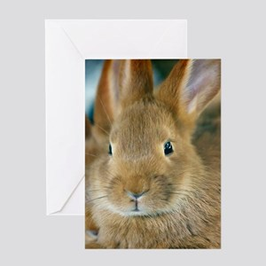 Animal Bunny Cute Ears Easter Greeting Cards