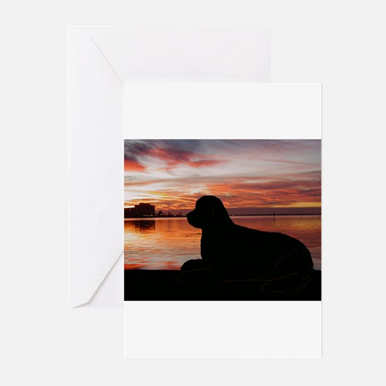 Cute Dog photos Greeting Cards (Pk of 20)