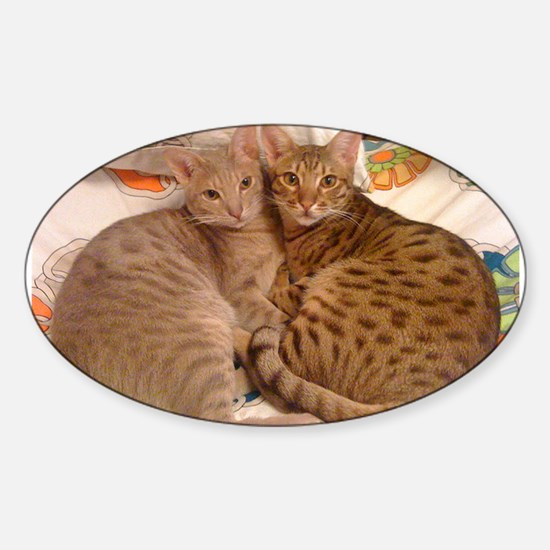 ocicat lavender and chocolate Decal