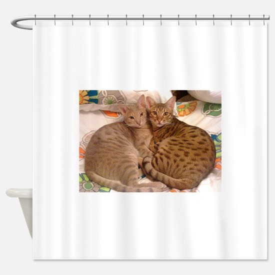 ocicat lavender and chocolate Shower Curtain