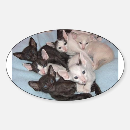 oriental shorthair kitten group Decal