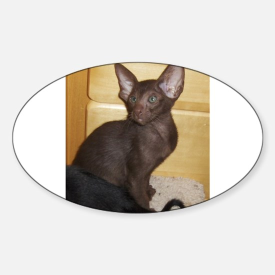 oriental shorthair kitten Decal