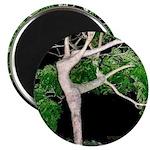 Tree Goddess Simulacra Magnet