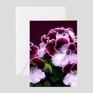 Pink Purple Geraniums Greeting Cards