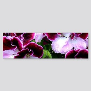 Pink Purple Geraniums Bumper Sticker