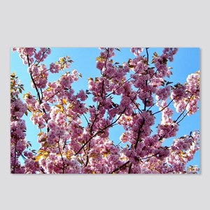 Rose Spring Blossoms Postcards (Package of 8)