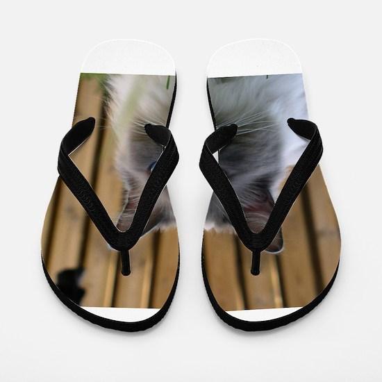 ragdoll Flip Flops