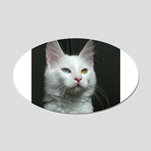turkish angora two colored eyes white Wall Decal