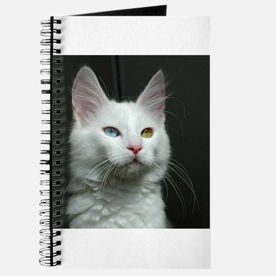 turkish angora two colored eyes white Journal