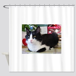 turkish angora black white Shower Curtain