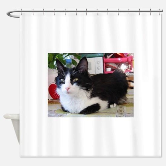 turkish angora black white Shower Curtain