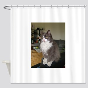 turkish angora gray white Shower Curtain