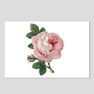 Elegant rose Postcards (Package of 8)