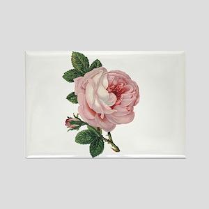 Elegant rose Magnets