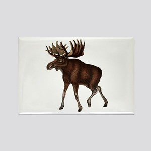 MOOSE MOVEMENTS Magnets