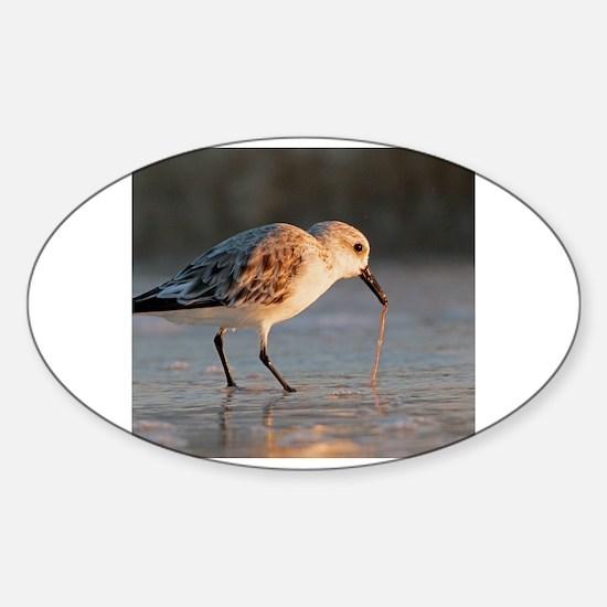 Cute Birds eat worms Sticker (Oval)