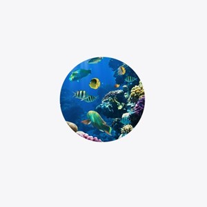 Sea Life Mini Button