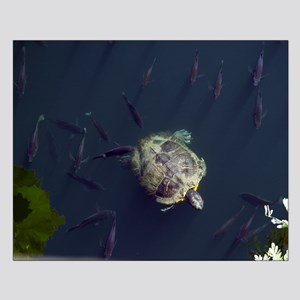 20x16 Turtle And Fish Poster Print