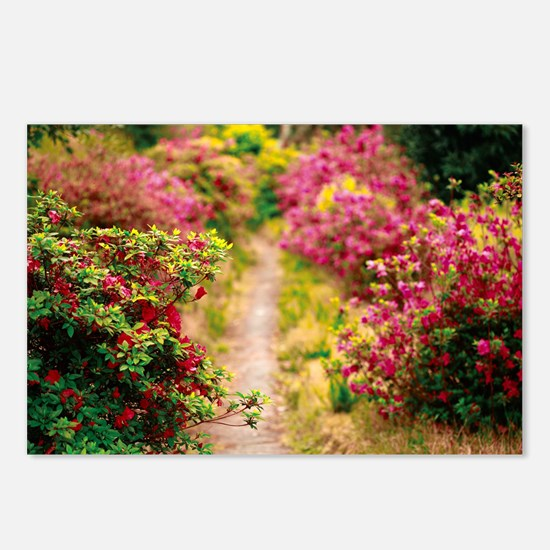 Footpath with azaleas Postcards (Package of 8)
