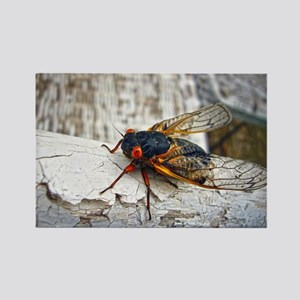 Red Eyed Cicada Magnets