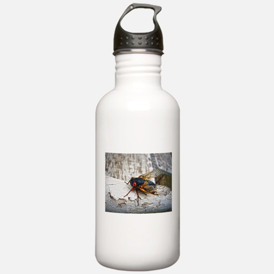 Red Eyed Cicada Water Bottle