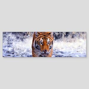Tiger In Waterfall Bumper Sticker