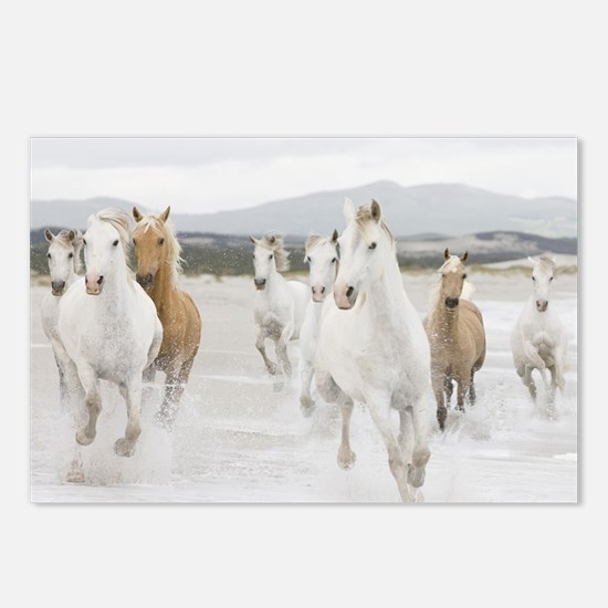 Horses Running On The Beach Postcards (Package of