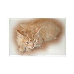 Orange Tabby Kitty Rectangle Magnet