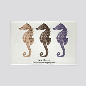 Sea Horse Vintage Art Rectangle Magnet