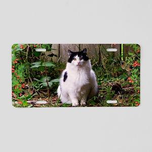 Fat Cat Art Aluminum License Plate